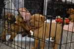 Pups For Vets Open House 4