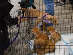 Pups For Vets Open House 1