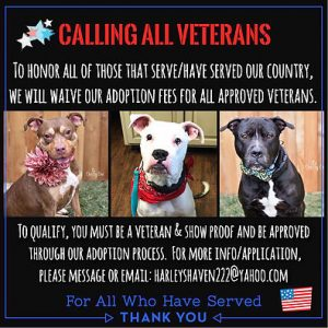 Pups for Vets 1